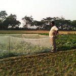 Insect Net ( With Insecticide)
